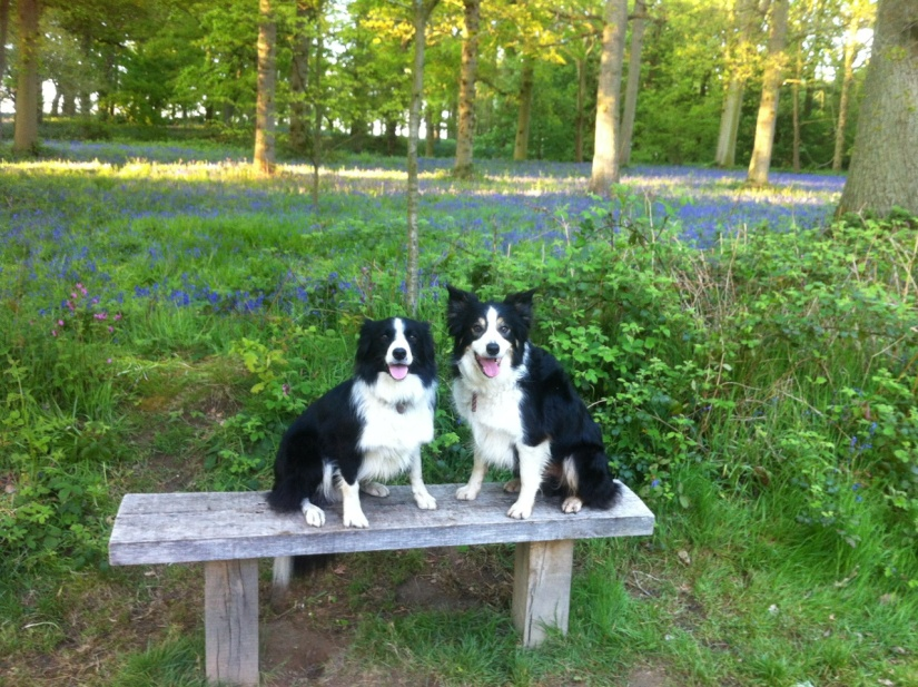 Dogs sat on a bench