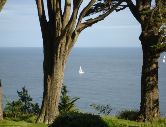 View through trees to the sea