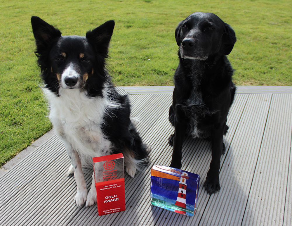 Dogs showing off their Dog Friendly awards