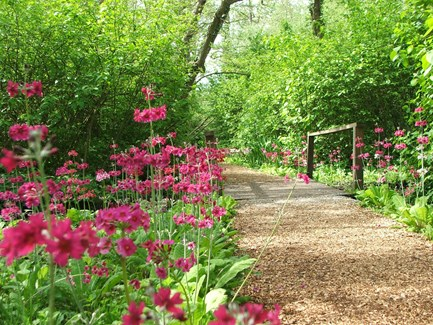 FAIRHAVEN WOODLAND AND WATER GARDEN IN BLOOM