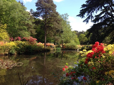 Azalea Water Gardens at Stody Lodge Gardens
