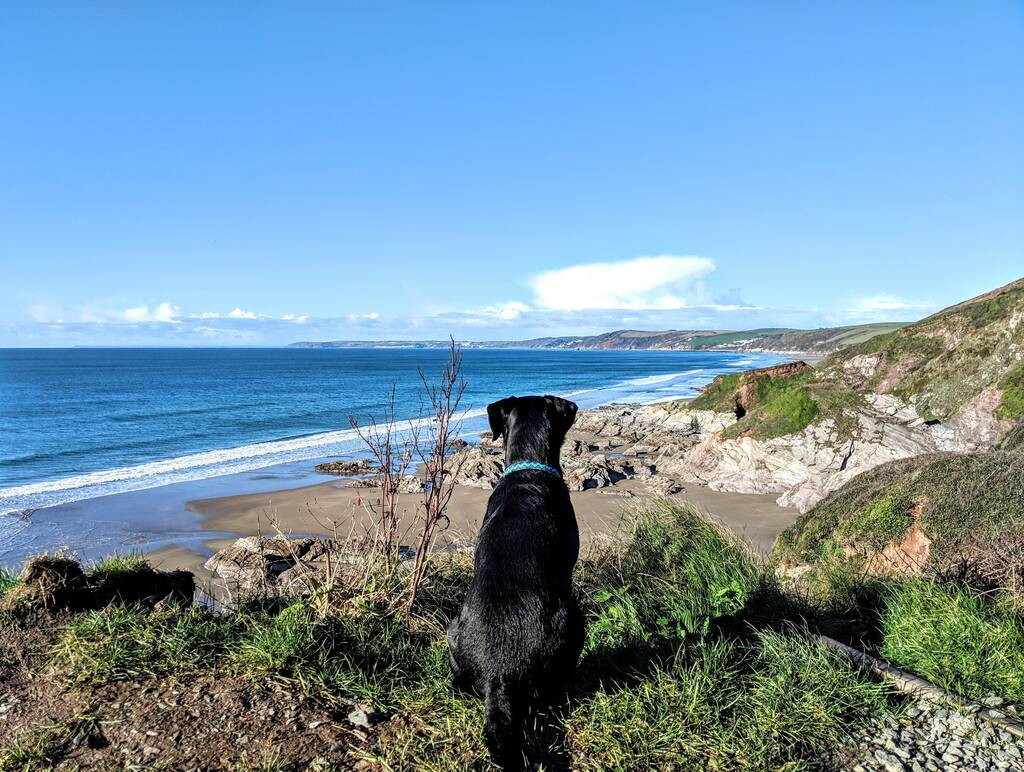 Dog looking out to the Cornish coast