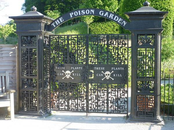 The Poison Garden in Alwnick