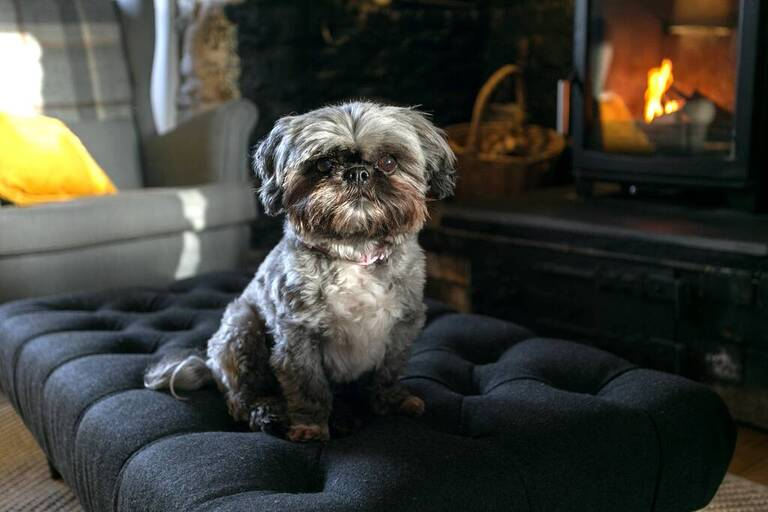 Dog sat on a sofa bed in front of the fire in a cottage