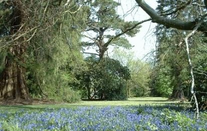 Bluebell Days at Hartland Abbey